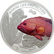 """Pez """"Detrás del coral"""" en Protección de la Vida Marina 2016"""""""
