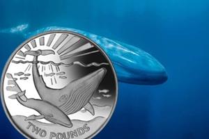 """La Ballena Azul en """"Vida Marina"""" de las Islas Sandwich y Georgia"""