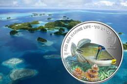 Palaos y el Pez Ballesta en 'Vida marina en el Mar Rojo'