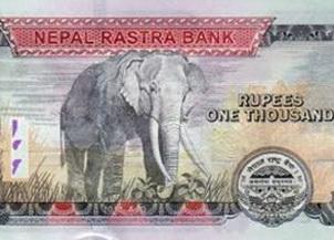 Nuevo billete de 1.000 rupias de Nepal y la controversia del elefante