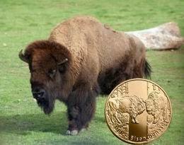 """""""Animales del mundo"""": el bisonte europeo en 2 y 20 zloty de Polonia"""
