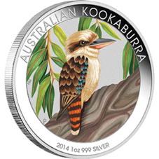 Kookaburra De Plata Australiano A Color